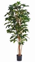 Kunstplant Coffea arabica 180 cm