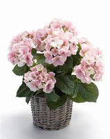 Kunstplant Hortensia roze in mand