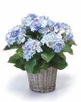 Kunstplant Hortensia blauw in mand