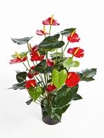 Kunstplant Anthurium de luxe rood
