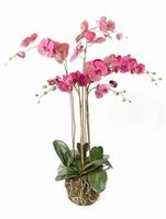 Kunstplant Phalaenopsis with moss beauty